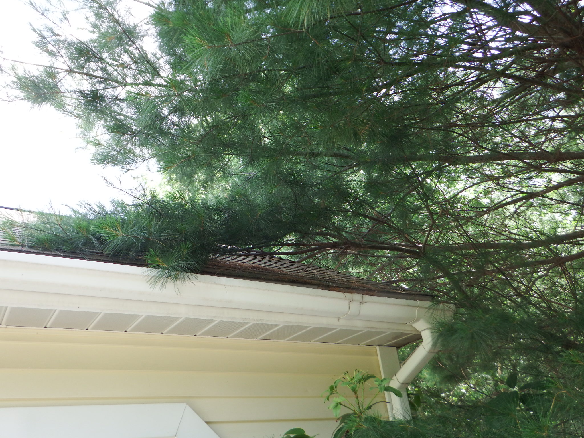treesoverroof