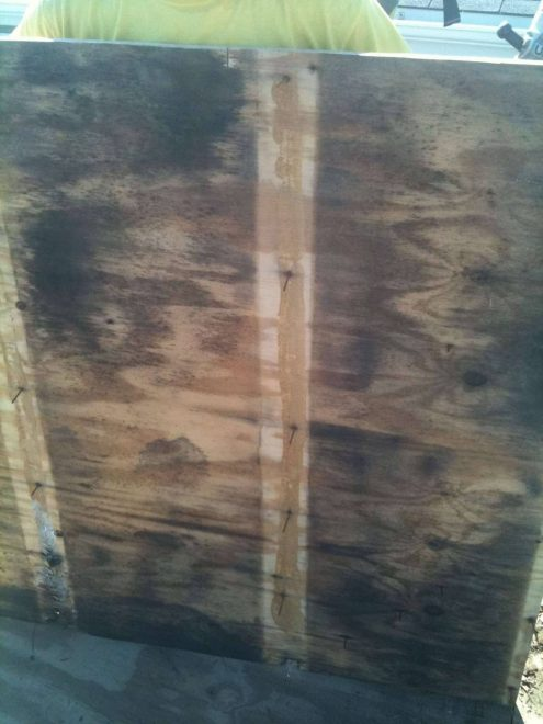 Moldy Plywood Chicago
